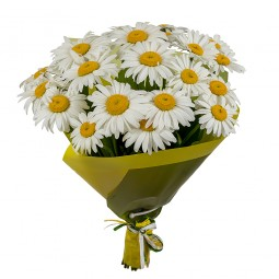 Bouquet of 25 Daisies