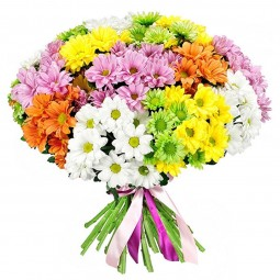 101 Multicolored Chrysanthemums