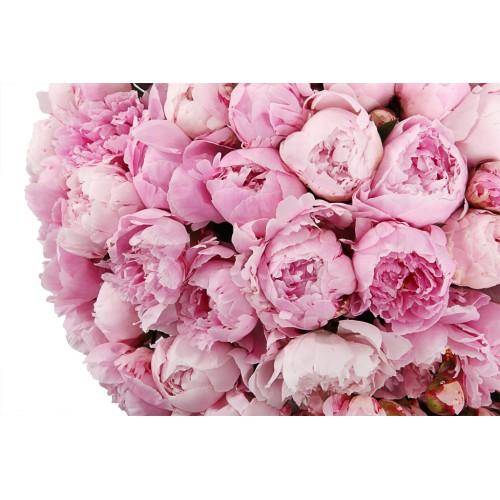 Buchet de 51 Bujori roz olandezi