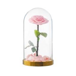 Tandafir roz criogenat