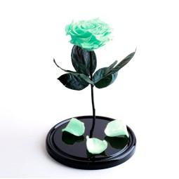 Cryogenic Turquoise Rose
