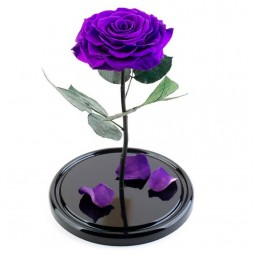 Trandafir violet criogenat